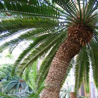 Themarondleiding juli: geurplanten en toepassingen
